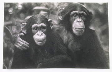 john-geary-art-chimps-1