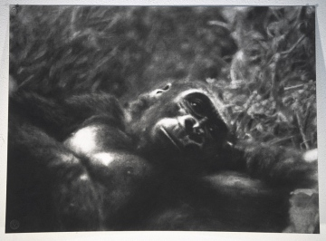john-geary-art-gorilla-lounging-1