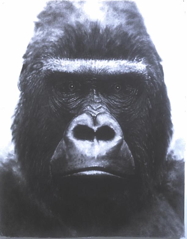 john-geary-art-michael-gorilla