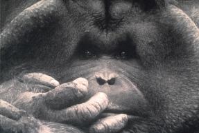 john-geary-art-orangutan1